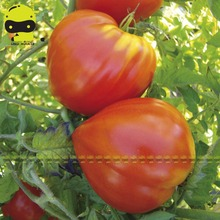 100% True Heirloom Ox-horn Heart Tomato Vegetable Seeds, 50 Seeds/Pack, NON GMO Edible Organic Fruits Plants(China)