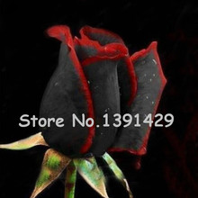 11.11 On Sale!!! Rare Red + Black Rose Flower Seeds Rare Amazingly Beautiful Bonsai Balcony Flower Seeds 120PCS + Mystery Gift(China)