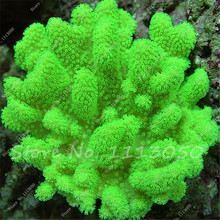 1000 Pcs Aquarium Plant Seeds,Moss Fern Aquarium Plant Fish Tank Aquatic Seeds Landscape Decoration Ornament Garden Indoor Grass