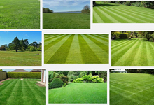 home & garden Lawn Seed 500pcs Grass Seeds Fresh Green Soft Runner Natural Plant Free shipping