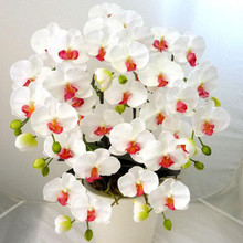 Indoor Balcony Office Rare White and Red Orchid Seeds Phalaenopsis Orchid Bonsai Pot DIY home garden plants Flowers seeds200PCS