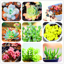 Big Sale!10pcs/Pack 99 Kinds to choose Lithops Seeds Succulents Seeds Pseudotruncatella Office Bonsai Flower Seeds,#2F4LCD