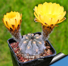 Best-Selling!10pcs mini cactus seed (Astrophytum) succulents plants seeds DIY home garden Rare flower Flores,#MAHPKJ