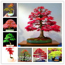 Free Shipping 20pcs Maple Feathers Seeds Bonsai Seed The Budding Rate 90%,#F4IXK7