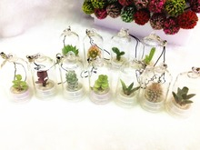 Free Shipping (20pcs/lot)Mini Cactus, Mini Plant Baby,Angel Greenhouse,Carry Farm,Plant Pendant,Radiation Protection,Pet Flower(China)