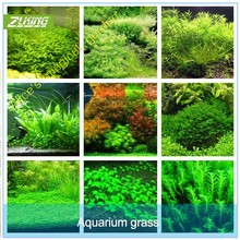 ZLKING 1000pcs New Aquarium Grass Seeds (mix) Water Aquatic Plant Seeds Family Easy Plant Seeds For Decorate The Aquarium