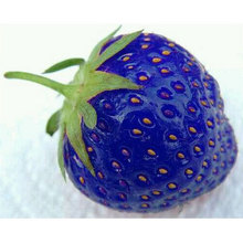 Hot Sale !!!Free shipping 100PCS Natural Sweet Blue Strawberry Seeds Nutritious Delicious Plant Seed in stock(China)