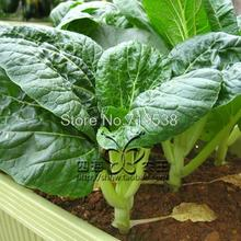 milky white 100 seeds Vegetable seeds
