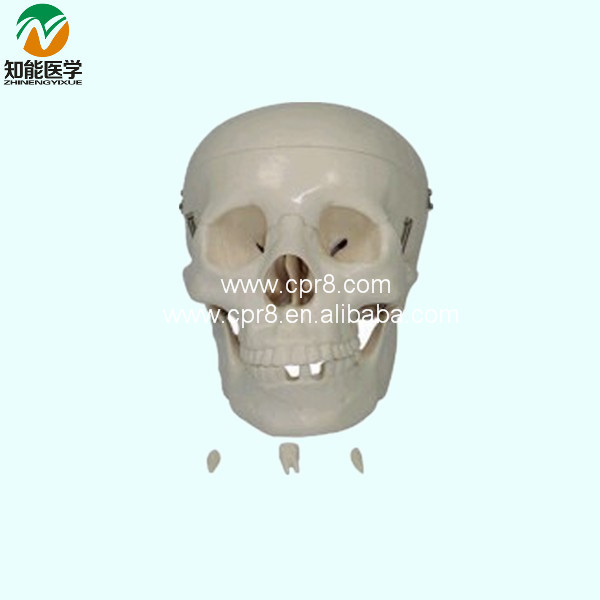 The Skull Model BIX-A1043 WBW241<br>
