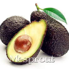 Big Promotion 10pcs New Rare Green Avocado Seed Very Delicious Pear Fruit Seed Very Easy Grow For Home Garden Free Shipping(China)
