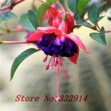 Hot Sale 100 seeds/pack wholesale Bonsai imported edible herb seeds beauty, bathing, cooking