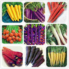 300pcs Carrot Seeds Organic Healthy Fruit Vegetable Seeds 9 Colours To Choose Sweet And Healthy Plant For Home Garden(China)