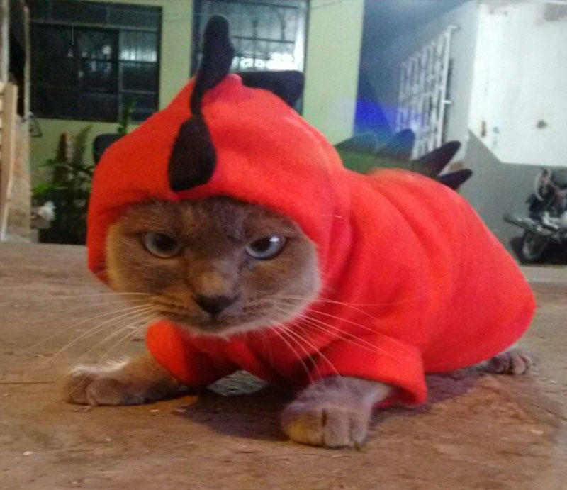 Halloween Dragon Costume Clothing For Cats & Dogs