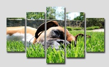 Framed 5 Panels French Bulldog poster living room cuadros modernos Canvas modular Painting Decorative Photos Dog Lovers Decals