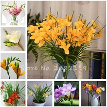 Best-Selling! 100 pieces / bag, Freesias Seeds, Bonsai Seed, Flower Seed, Gorgeous Freesia Flower Balcony and Office