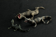 Simulation Model Zoo Wild Animal World of Male and Female Nile Crocodile and Alligator Cub Children's Toy(China)