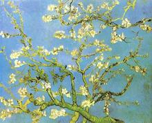 100% hand-painted oil painting reproduction old master van gogh canvas  landscape painting Blossomong Almond Tree