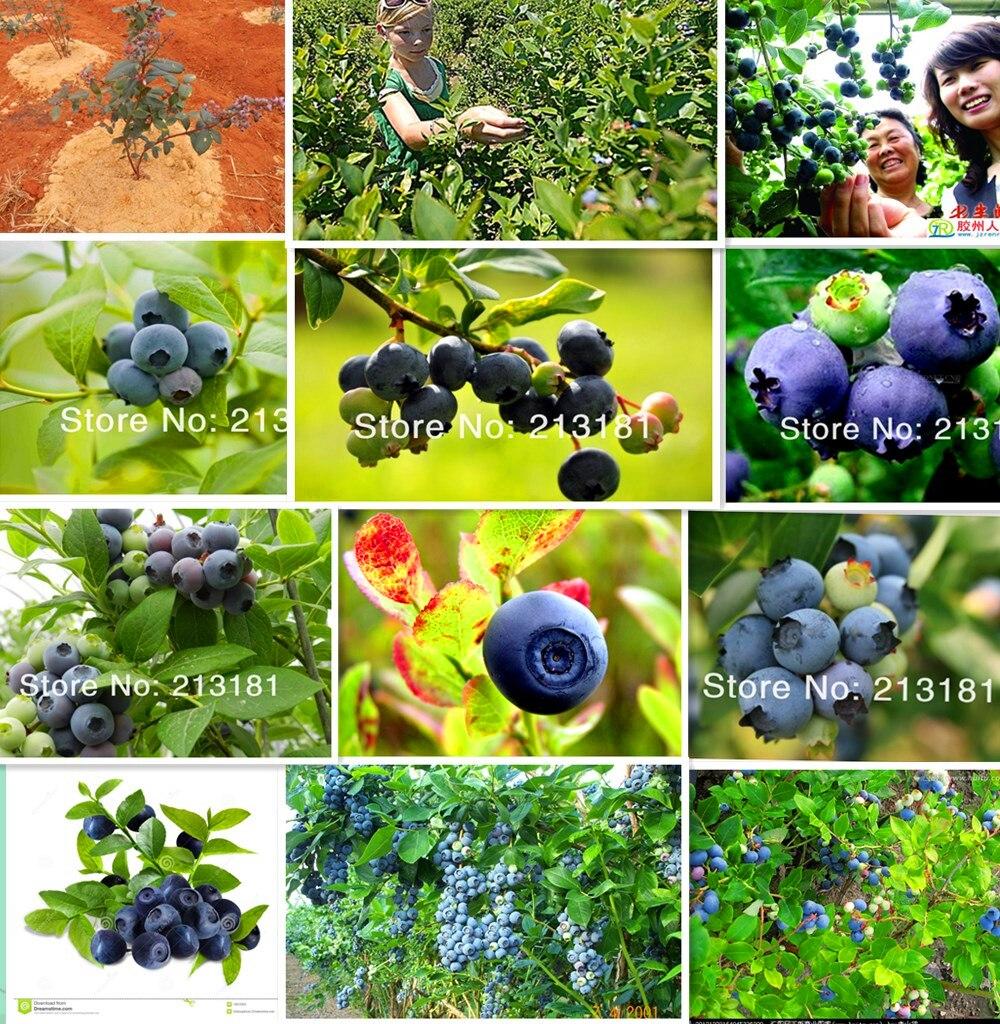 Compra bonsai frutales de vivero online al por mayor de for Vivero online arboles