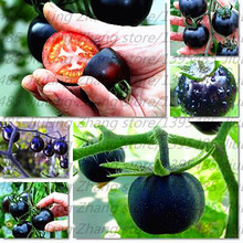 200pcs/bag black tomato seeds vegetable and fruit seeds Resistant to diseases ornamental-plant fruit tree seed for home garden