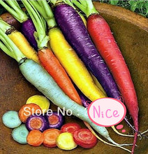 Wholesale!! 200 pcs/ 7 colors rainbow carrot seeds Vegetable seeds carrot crazy varieties fruit seeds lose weight health care(China)