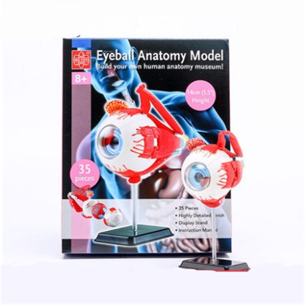 3D Mini Eyeball Anatolly Model 35 pcs Assembled Human Anatomy Model Gift for Children<br>