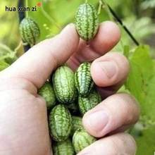 Thumb Watermelon Seeds Mini Watermelon Delicious Fruit Seed 10 Particles / lot(China)