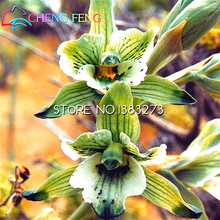 100 Pcs Lily Of The Valley Flower Seeds Rare Pet Skin Orchid Seeds Home Bonsai Flower Plant Seed Cute And Beautiful Pot Sementes