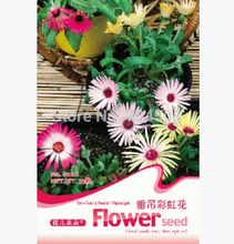 FD1377 Delosperma Cooperi Flower Seed Mixed Colors Hanging Flower 1 Pack 50 Seed