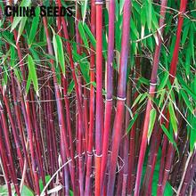 A Package 50 Pieces Seeds Fresh Giant Moso Bamboo Seeds For DIY Home Garden Plant tree seed jardin Beautiful Bonsai Sementes
