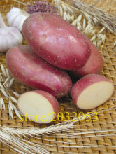 potato seeds red skin potato 200 Empress Vegetable seeds from china  NO-GMO  for home garden vegetable
