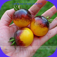 Very Rare Bumble Bee Heirloom Tomato Seeds, Professional Pack, 300 Seeds / Pack, Low Acid Tomato #LG00013