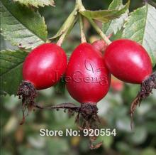 Imported seed, 5pcs/lot Dog Rose,Rose Hips,Rosa Canina seeds Edible fruit bonsai plant DIY home garden free shipping