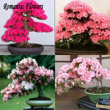 Big Promotion!10 Particle/Bag Japanese Sakura Potted 8 Different Varieties Of Garden Potted Red Pink Cherry Blossoms