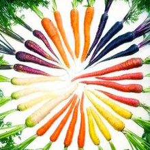 free ship 100 seeds Bonsai Rainbow Carrot seeds Rare Chinese Vegetable Seeds-Healthy Organic Sugar Carrot seeds(China)