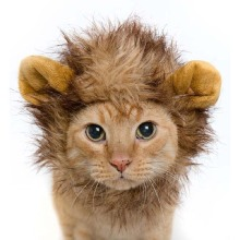 Pet Hat For Dogs Emulation Lion Hair Mane Ears Head Cap Autumn Winter Dress Up Costume Muffler Scarf
