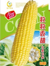 Super Sweet Fruit And Sweet Corn Seed Capsules 5 Pcs Green Vegetable Seed(China)
