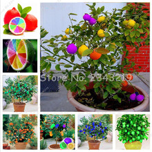 30 pcs Colorful Dwarf limon Tree Seeds Rainbow Lemon Seed Exotic Garden Fruit Seed Potted Bonsai Tree Houseplants Can be Eaten