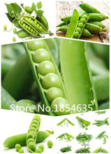 Promotion! 100 pea Seeds 9 different Colors Vegetable Seeds High Quality DIY Garen Perennial Blooming Plants Flowers(China)