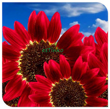15pcs/bag Helianthus Red Sunflower Seed, Red Sun Fortune Bloom, Garden Heirloom Seeds, Flower Seeds, Bonsai Plants Free Shipping