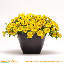 100 Seeds / Pack, Lemon Yellow Slice Super Bell Flower Calibrachoa Petunia Annual Flower Seeds for Home Balcony Flower(China)
