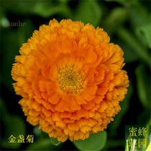 Promotion Special Offer Summer Excluded Regular Balcony Seeds Marigolds Golden Light Long Sour Flowers 100seeds(jin zhan ju)(China)