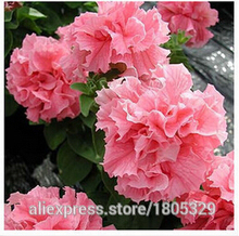 100pc/lot free shipping Morning glory seeds petulantly seeds balcony bonsai flower petunia set