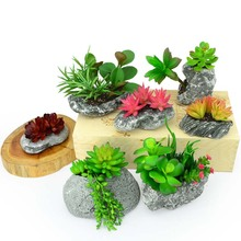 Simulation fake meat plants green potted meat plant model package mailed off bonsai furnishing articles home decoration
