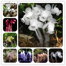 120 pcs Rare Monotropa Uniflora Flower Seeds China White Crystal Orchid Seeds Dwarf Plants Potted Plants Garden Flowers Mixed
