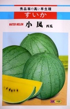 From Japan 1 Original Packing, 100pcs Seeds/Pack, Xiao Feng Green watermelon seeds with yellow flesh, fruit can be 2kg
