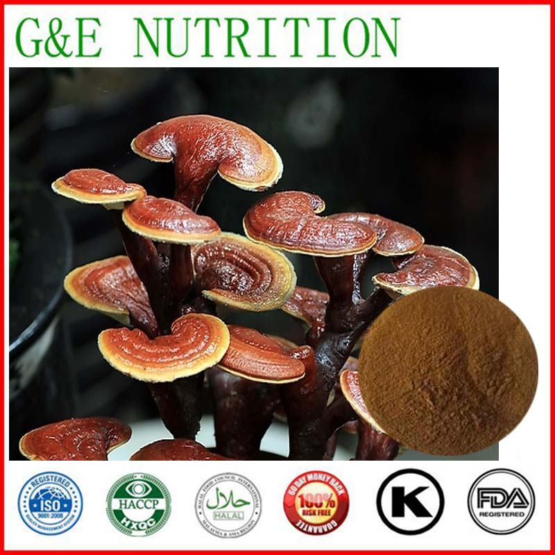 500g GMP Supplier Reishi Mushroom/ Lucid Ganoderma/ Ganoderma/ Lingzhi mushroom Extract with free shipping