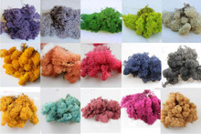 50g Eternal Life  Preserved Moss For Wedding Party Home Hotel Decoration DIY Bouquet Material Accessory