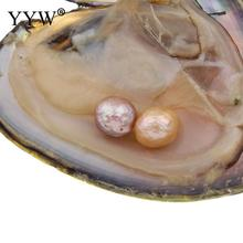 YYW Jewelry Natural Shell Wish Pearl Oyster Vacuum-packed 10-11mm Pink Purple Natural Real Pearls Beads in Oyster Pearls Shell(China)
