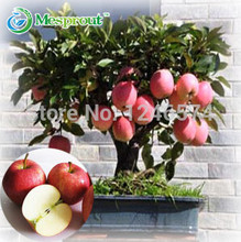 100 pcs Bonsai Apple Tree Seeds rare fruit bonsai tree-- red delicious apple seeds garden for flower pot planters(China)