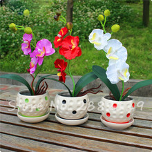 Free Shipping, Phalaenopsis Orchid Seed,100 pcs Beautiful Orchid Seeds, Natural Growth Balcony Poted Flower Seeds for Sale!